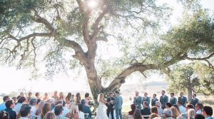 Ceremony Under Oak Tree